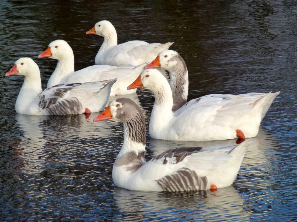 Watervogels komen niet tekort