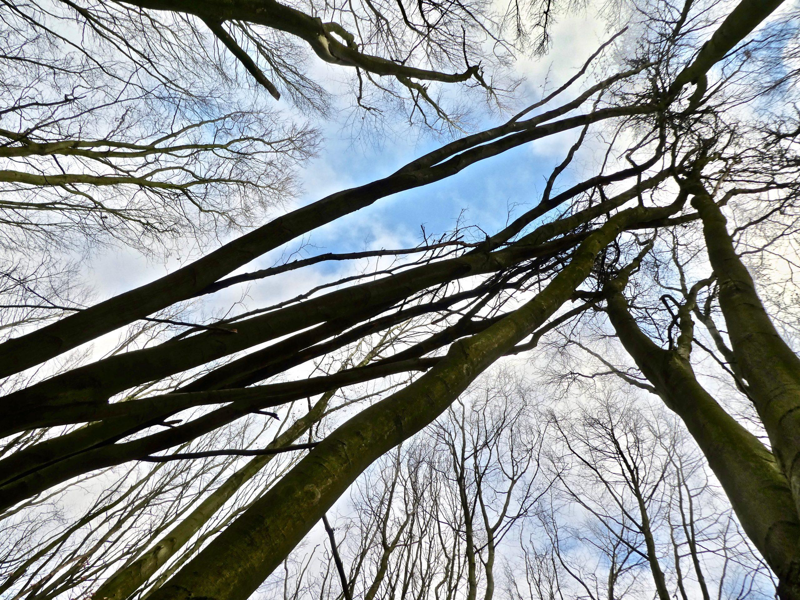 Mikado in het groot. Een omgevallen boom rust op zijn buurman