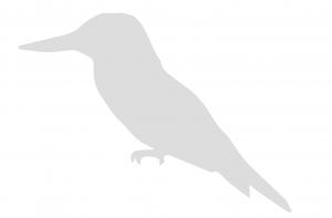 Logo Vrienden van het Amsterdamse Bos