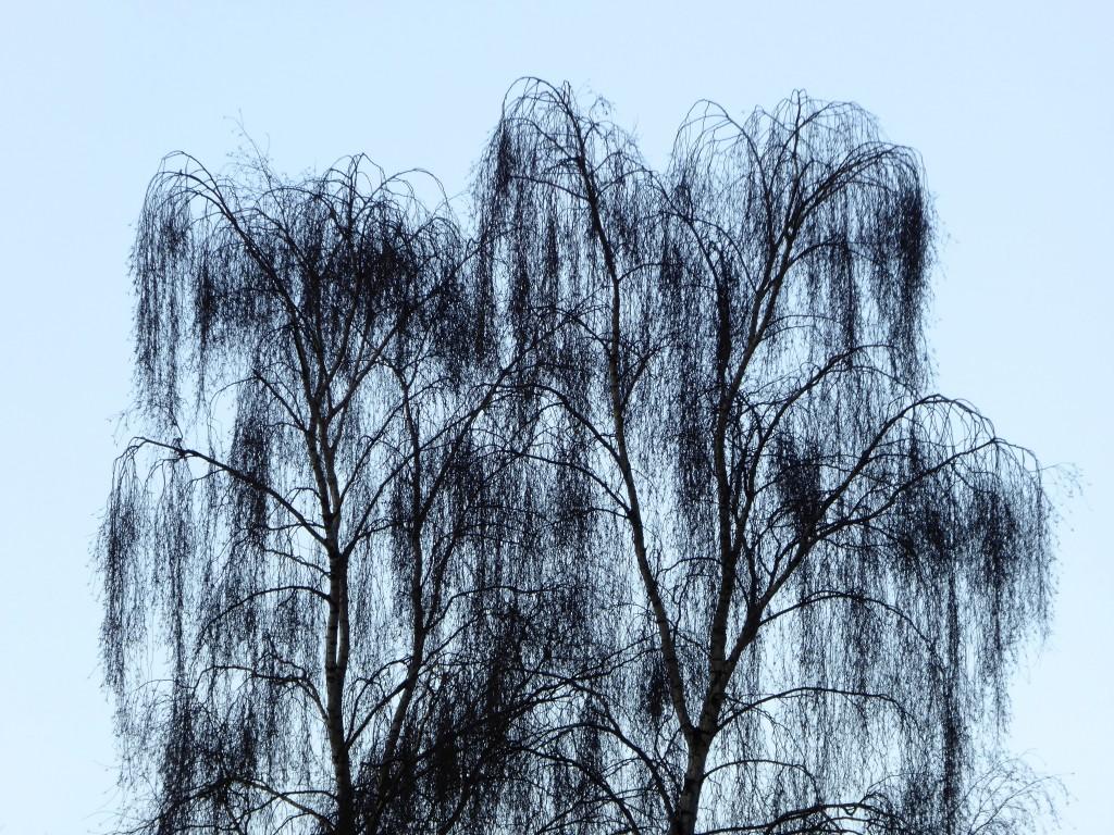 420 Hectare aan bomen