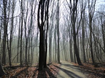 Natuurbos in de winter