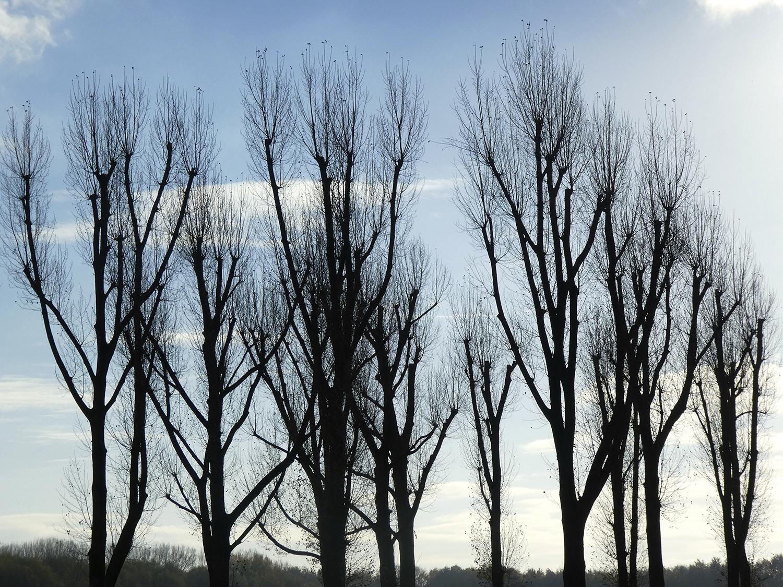 Deze prachtige bomen worden geveld