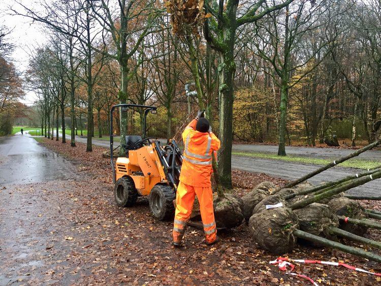 Nieuwe bomen liggen klaar voor het Gasunieterrein