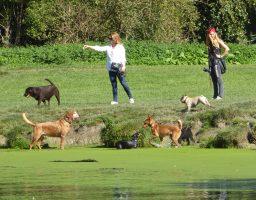 'Fijn dat honden los mogen lopen.'