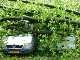 Zomer 2015 vielen er tijdens een storm bomen op auto's op de parkeerplaats bij de hoofdingang