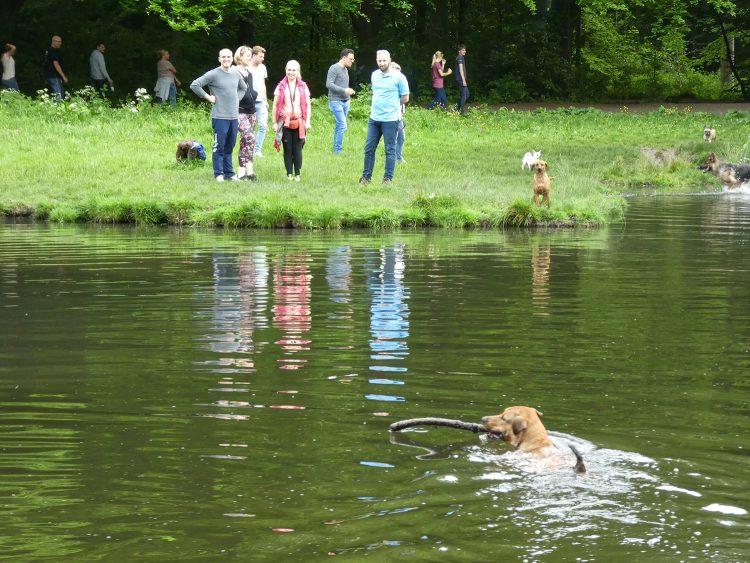 Zwemmende honden - iedereen wordt er blij van