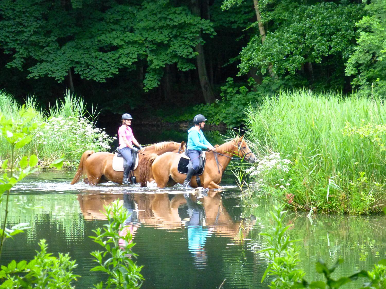 Een van de favoriete plekken is de waadplaats als er paarden doorheen gaan