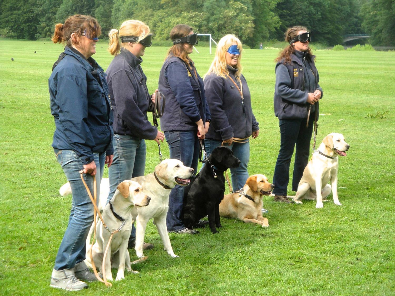 Een training in het Bos van honden en begeleiders van de KNGF