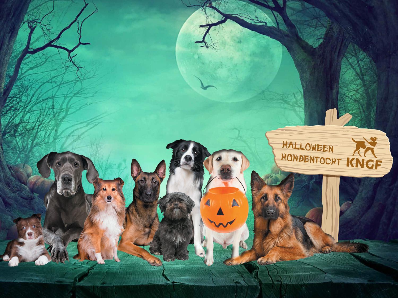 Zaterdag 27 oktober: de Halloween Hondentocht