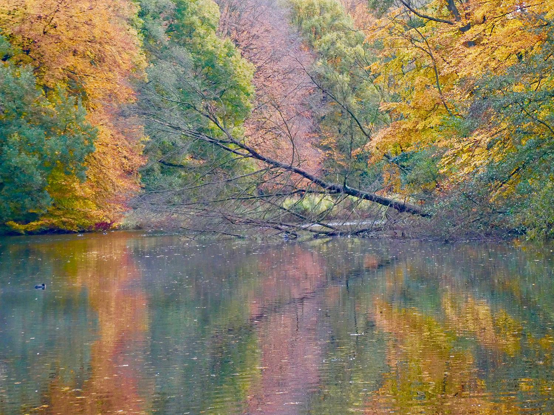 Afgelopen weekend waren de herfstkleuren op hun hoogtepunt