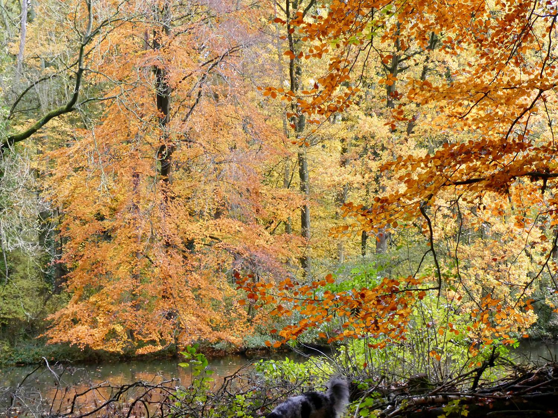 Voor meer herfstfoto's zie de Fotopagina bovenin bij Beeld