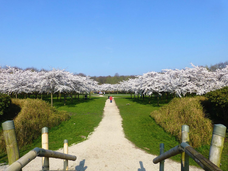 Uitzicht vanaf de bamboebrug op het Bloesempark
