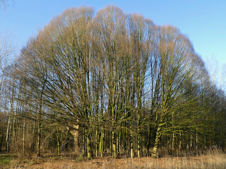 Vanonder deze bomen zijn de 'luchtpaden' bij de kruinen goed te zien