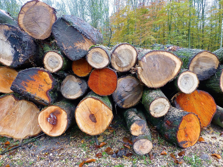 Veel gezonde bomen moeten het ontgelden