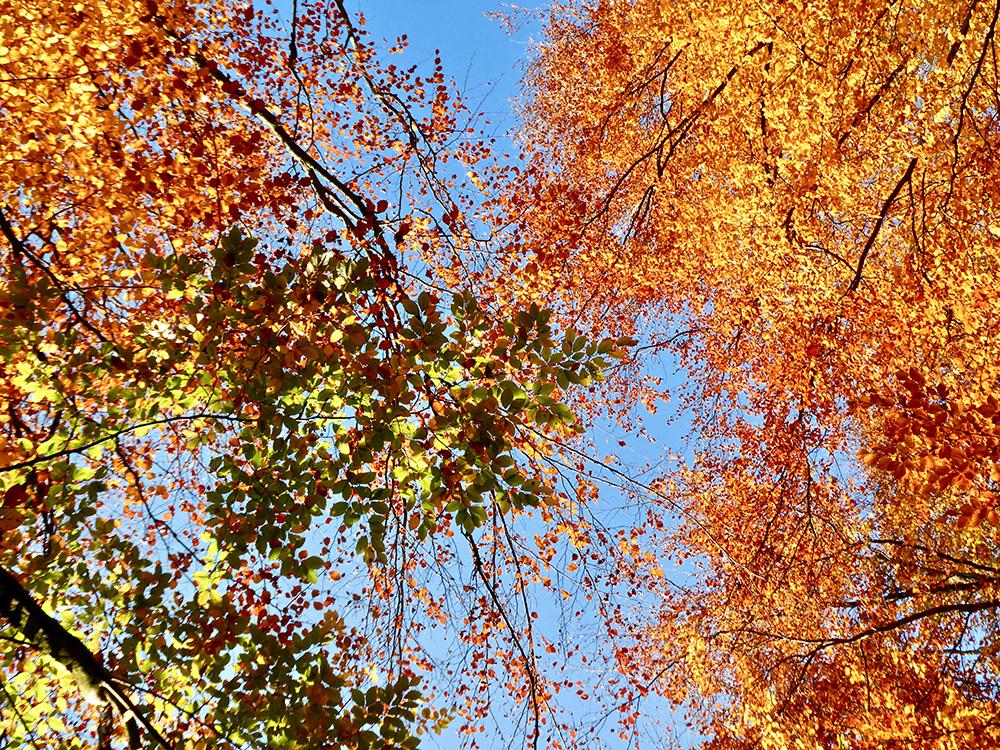 Begin november zijn de herfstkleuren op hun mooist