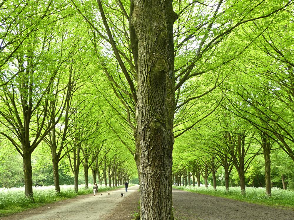 Alle bomen netjes op een rij, ziedaar een aangelegd bos