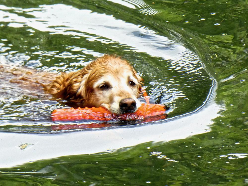 Voor de honden zijn er zeven strandjes met water in het Bos