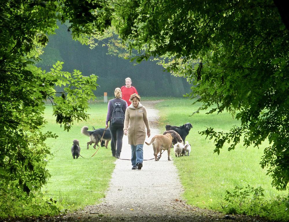 Baasjes en honden vinden elkaar in het Bos