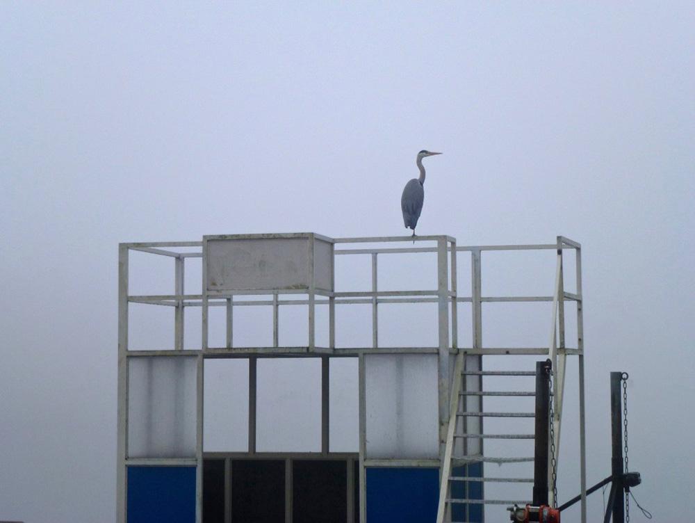 Een reiger op eenzame hoogte in de mist