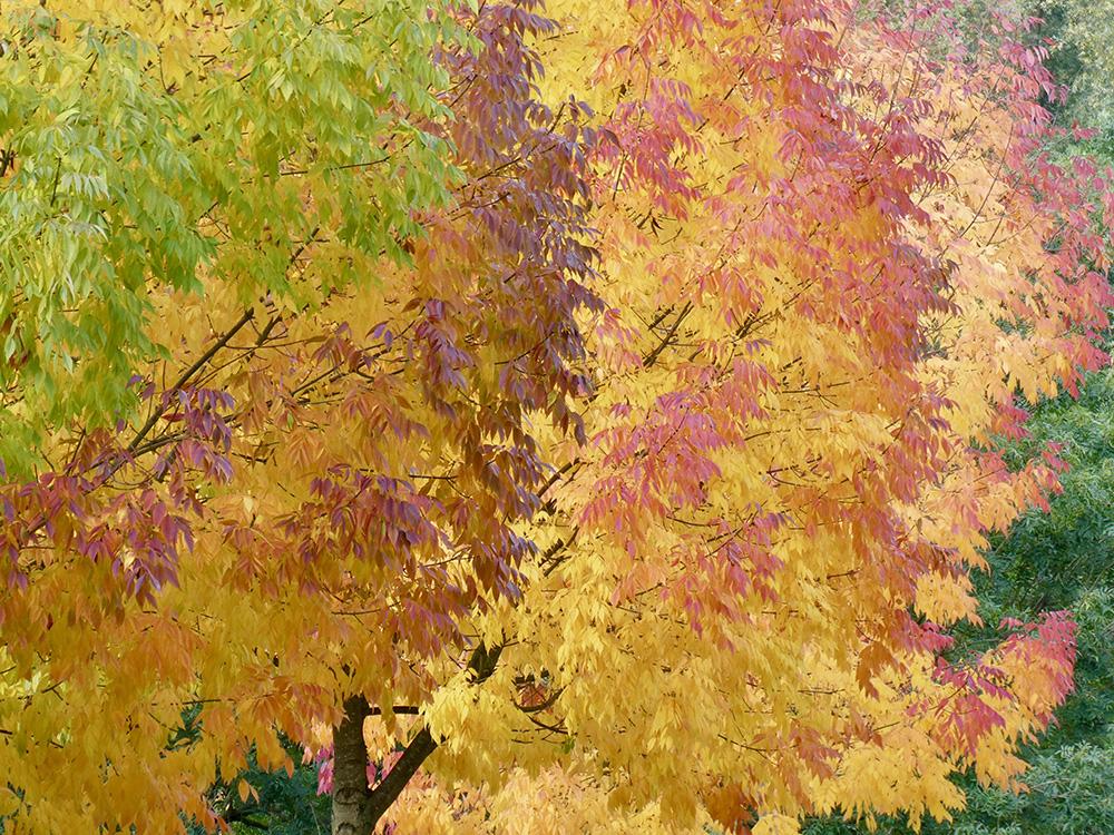 Tijd voor de herfstkleuren
