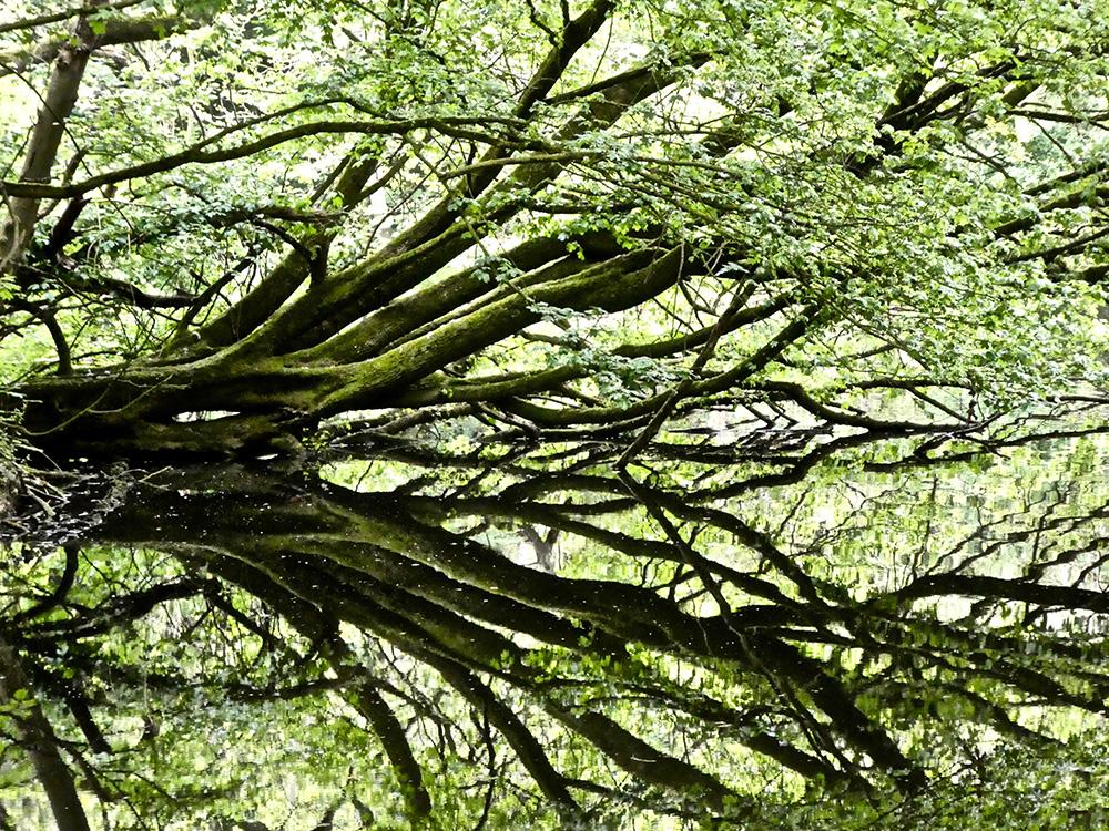 Deze spectaculaire boom mag blijven liggen