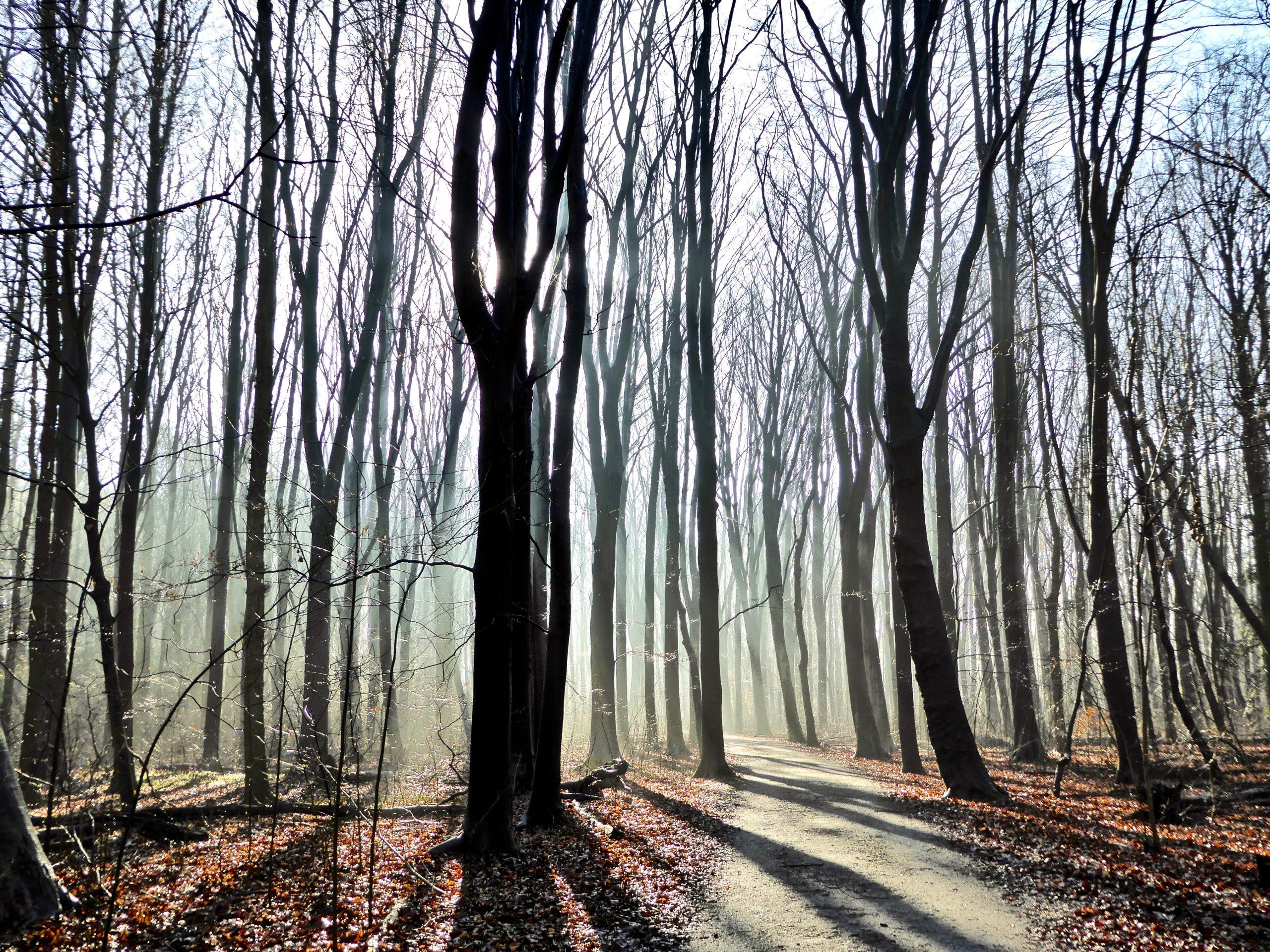 Waar paden verdwijnen, ontstaat nieuwe natuur.