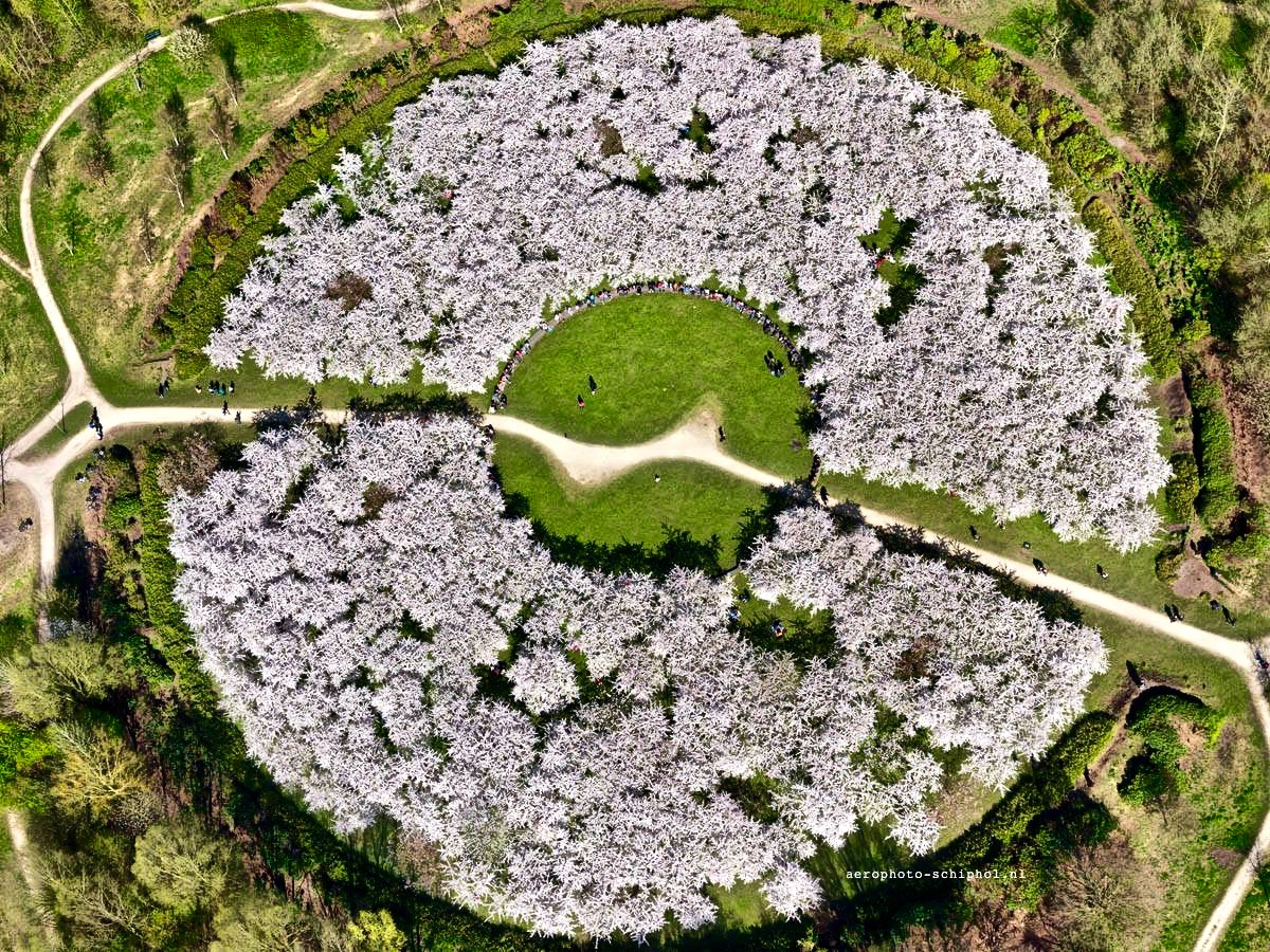 Het Bloesempark in volle bloei vanuit de lucht gezien. Een opname van vorig jaar gemaakt door Aerophoto-Schiphol.